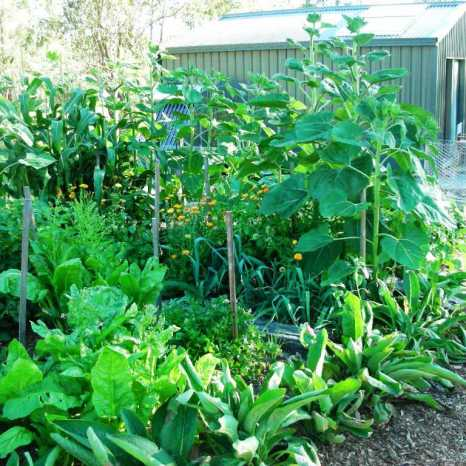 Chevron Vegetable Garden
