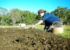 Planting early morning