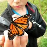 Max and the butterfly