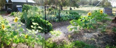 1 Kitchen Garden Dec 2013
