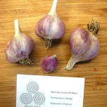 drying and processing garlic for sale