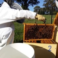 Beekeeping - putting the Bees first.